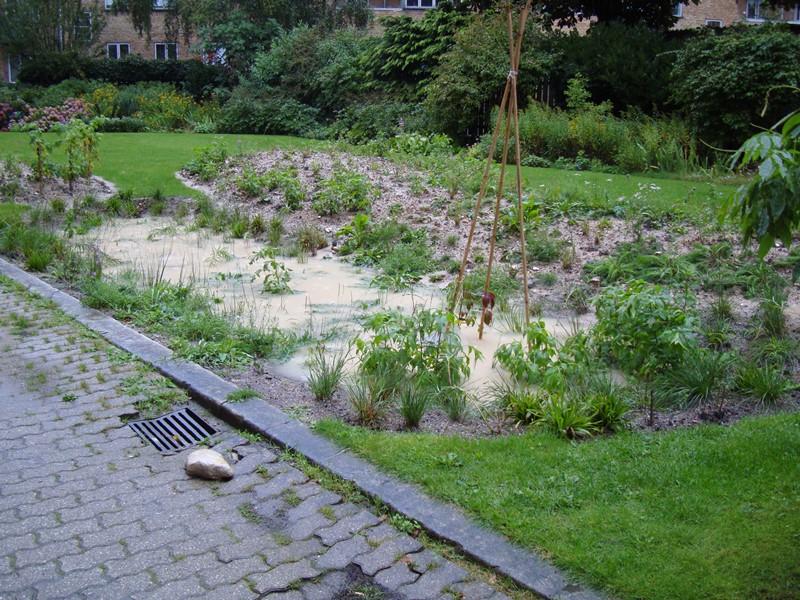 Regnvandsbedet fyldt 31.08.2014 kl. 07.30